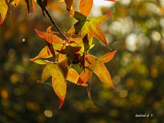 EL OTOO QUE SE FUE...... (GABITA1999. THANKS FOR A MILLION VIEWS) Tags: new autumn nature hojas bokeh colores otoo