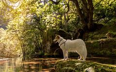 7/12 Nadja (utski7) Tags: 12monthsfordogs2016 nadja orgeon creek roadtrip water summer 2016 vacation travelwithdog