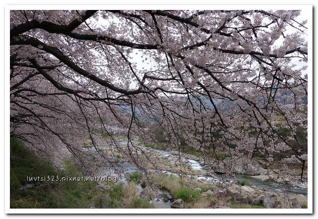화개십리벚꽃길21