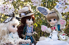 Mad Mad Hanami Tea Party 1 (Kyubi09) Tags: party white rabbit tea blossoms groove sakura pullip hanami hatter isul alicewonderland