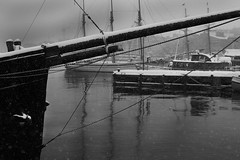 Oslo Dock (Stefano-Bosso) Tags: winter sea bw snow love monochrome oslo norway docks mono landscapes norge blackwhite europe noiretblanc boast btw blackwhitephotos stefanobosso
