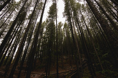 Reach (Patrick.Russell) Tags: trees pine forest nikon colorado wideangle tokina co d300 lodgepole 1116