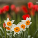 flowers - IMG_9713