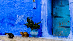Chefchaouen (Damien Fauchot) Tags: maroc chefchaouen janvier afrique 2015 tourdumonde