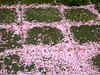 Abfall (radochla.wolfgang) Tags: gesehen blüten ummeecke