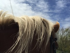 Blowing in the wind (gill4kleuren - 11 ml views) Tags: life horse me sarah fun outside happy running gill saar paard haflinger