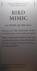 Ornithomimus  - Bird Mimic - Info (juan_guthrie) Tags: drumheller alberta royaltyrrellmuseum dynosaur