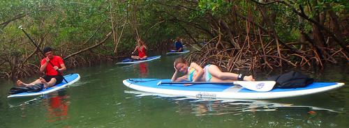 5-17-15 JackDee_Terry & Co Paddleboard Tour Sarasota  (14)