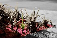 purple tiers (Hernan Soberon) Tags: flowers corner purple medellin inc endor canon70d hsoberon hernansoberon