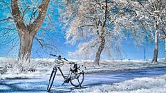 My bike ir (Yasmine Hens) Tags: ir nikon europa flickr belgium ngc infrared namur hens yasmine wallonie 720nm infrarouge kolari nikond90 iamflickr flickrunitedaward hensyasmine