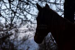 Silueta (tamara.lsanchez) Tags: horse naturaleza nature animal caballo silouette silueta ecuestre equestrian