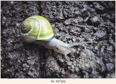 Schnecke on Tour