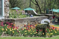 Ladew Gardens Cafe (karma (Karen)) Tags: flowers trees gardens tulips maryland tables umbrellas bushes monkton cafes patios ladewtopiarygardens nrhp cmwdgreen harfordco