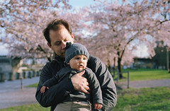the dynamic duo (manyfires) Tags: family boy portrait baby love film oregon analog 35mm portland michael spring downtown dad child blossom father son nikonf100 henry bloom pacificnorthwest sakura pnw cherrytrees peoplescape
