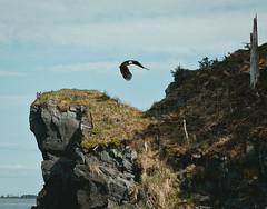 Fort Abercrombie State Park, Alaska (Logan Kruse) Tags: ocean travel animals alaska canon landscape photography coast landscapes photo wildlife coastline canon5d kodiak baldeagel
