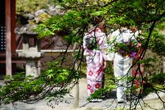 Momiji (p.fabian) Tags: japan jp   kimono   japn kytoshi kytofu japn