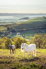 Mell Fell Ponies (Dave Fieldhouse Photography) Tags: morning trees summer horses horse backlight sunrise landscape outdoors nationalpark wildlife lakedistrict cumbria ponies eden pennines mistyvalley littlemellfell greatmellfell edendistrict