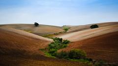 middle earth (santi_riccardo) Tags: terra naturalmente coltivazione siepi