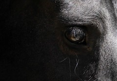 Worry (Deep B.) Tags: worry black horse eye animal sad darkness struggle fear thoughts soul alone pain