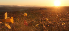 Matin de mai sur l'Aubrac (frederic.conte) Tags: morning flowers light sun fleurs sunrise landscape soleil ray lumire plateau paysage rayons matin jonquilles aveyron levdesoleil aubrac paturage buron