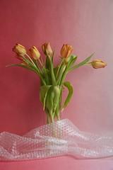 Tulpen #1, 2016 (Lexi Blue) Tags: pink stilllife orange flower green foil rosa objects stilleben plastic tulip colored grn stillife blume arrangement bunt abstrakt arranged tulpe plastik folie gestaltung gestaltet plastikfolie plasticfoil angeordnet objektfotografie arrangiert arrangedobjects canon6dmark3 luftblasenfolie