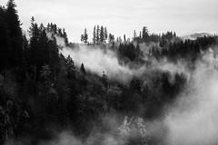 Cozy (Rebecca Haranczak) Tags: blackandwhite cloud mist mountain nature fog forest canon landscape 50mm mono washington wind pacificnorthwest westcoast pnw pinetrees snoqualmie 6d canon6d