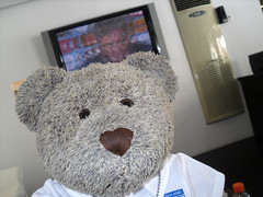 Kwik selfie before the match (pefkosmad) Tags: bear vacation england holiday ted june toy hotel fan football stuffed soft teddy euro soccer fluffy games plush matches 2016 finas holibobs tedricstudmuffin