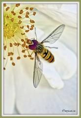 _JVA7681_DxO (mrjean.eu) Tags: park pink blue white france flower macro fleur rose yellow fleurs jaune garden rouge nikon jardin vert bleu botanic lorraine botanique parc metz 105mmf28 flowerws grteen