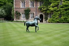 Horse (My photos live here) Tags: cambridge england horse art college canon eos university jesus lawn cambridgeshire 1000d