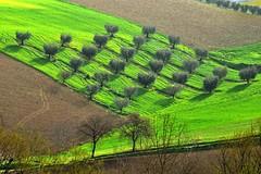 Ulivi (luporosso) Tags: trees italy naturaleza tree nature alberi nikon italia country natura campagna albero marche scorcio naturalmente scorci luporosso nikond300s