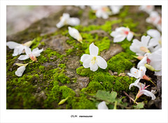 (ikuin) Tags: zeiss 35mm t f14 sony fullframe hualien ff  taitung   distagon carlzeiss   a7r   sonya7r ilcea7r sonyilcea7r fe35mmf14 2015   sel35f14z  carlzeissdistagontfe35mmf14za
