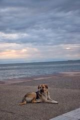 Streetboy (Kyriakos11) Tags: dog greece macedonia hund thessaloniki makedonia