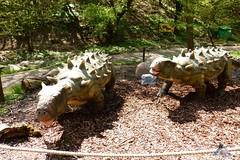 Zoo Bratislava 18.04.2015 143 (Fruehlingsstern) Tags: zoo zebra giraffe bratislava br gibbon dinosaurier katta schimpanse nashorn dinosaurierpark roterpanda zoobratislava weisetiger weiselwen panasonicfz200