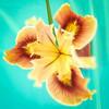 Iris (tourtrophy) Tags: iris flower macro fuji fujifilm x10 floralphotography westgatemall fujifilmx10 fujix10