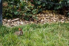 Brooklyn Botanical Gardens/Prospect Park (irvingwhitney) Tags: park new york nyc flower fern tree nature brooklyn garden botanical island long lavender bee bark sunflower bbg prospect alpha6000 sonya6000