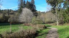 20160331_090531 (ks_bluechip) Tags: creek evans trails preserve sammamish usa2106