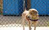 16-05-15_untitled_004 (Daniel.Lange) Tags: dog philadelphia dogs honey dogdayafternoon spado columbussquarepark