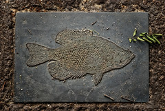 Stone Fish (garygrissom) Tags: philadelphia photography relief publicart sculpturalrelief