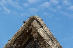 (Floramon) Tags: roof straw dach stroh beuren freiluftmuseum freiluftmuseumbeuren