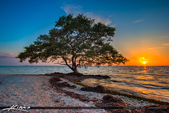 Picnic Island Park Sunset Mangrove Tree Tampa Bay (Captain Kimo) Tags: sunset tampa tampabay florida mangrove dogpark photomatixpro hdrphotography hillsboroughcounty picnicislandpark captainkimo