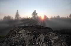 Morning Fog (bobban25) Tags: morning fog sunrise canon landscape sweden outdoor sverige scandinavia linkping stergtland 70d sturefors canoneos70d canon70d canonefs18135