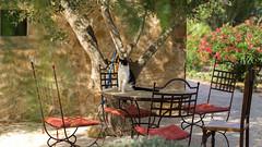 Cats place (El.buitre) Tags: summer tree cat table spain chair sommer katze tisch baum stuhl spanien finca a6000