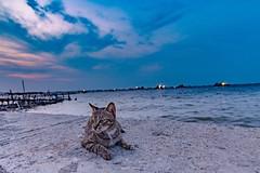Enjoy The Sunset (madi_patub) Tags: sunset cat landscape explore landscapephotography marunda landscapeshot