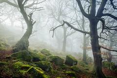 Reach out (J C Mills Photography) Tags: wood morning trees light mist green fog forest woodland landscape moss spring oak derbyshire peakdistrict boulders sessileoak canon5dsr