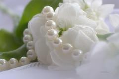 Intimit (Vootch) Tags: fleur plante pastel bouquet perle calme profondeurdechamp