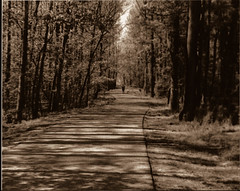Dark Forest (yasmine.royal) Tags: tree nature paths sepiatone