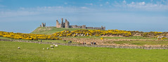 Dunstanburgh Castle (Maria-H) Tags: uk england panorama ruins unitedkingdom panasonic northumberland gb craster 1235 dunstanburghcastle gh4 dmcgh4