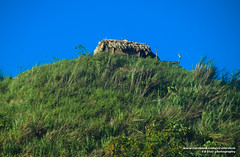 DSC_7936 (Ed Diaz Photography) Tags: hills bicol albay quitinday quitindaygreenhills
