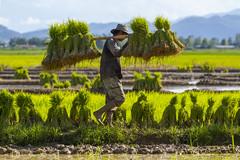 ChiangRai_7805 (JCS75) Tags: canon thailand asia asie chiangrai thailande