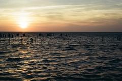 Swells (klolam) Tags: travel sunset sun film water silhouette 35mm landscape outdoors evening waves pentax kodak taiwan wetlands analogue dust pentaxmesuper kodakfilm gaomei  colorplus kodakcolorplus
